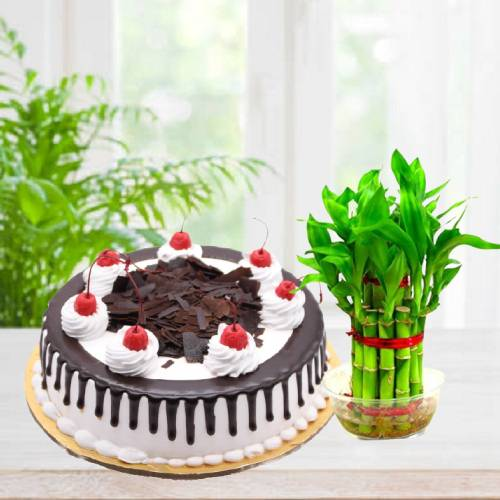 Delicious Black Forest Cake With Lucky Bamboo Plant