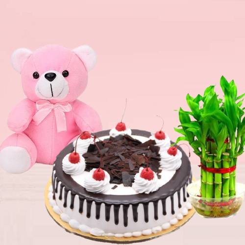 Delicious Black Forest Cake with Lucky Bamboo Plant and Pink Teddy Bear