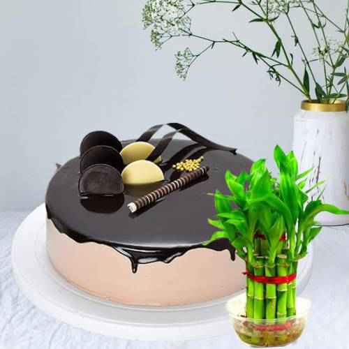 Yummy Chocolate Truffle Cake With Lucky Bamboo Plant