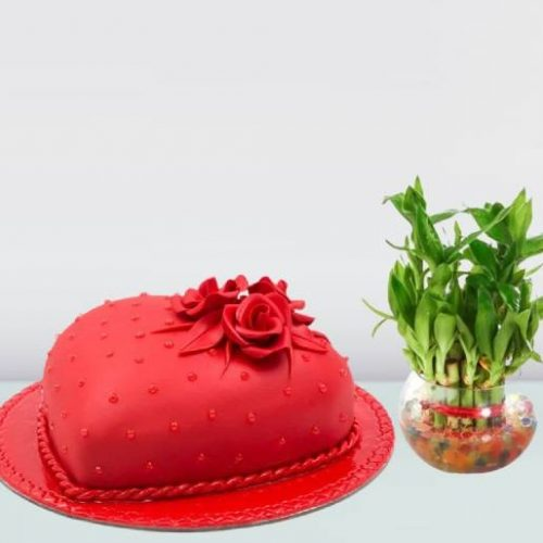 Cake-and-Plants-Combo