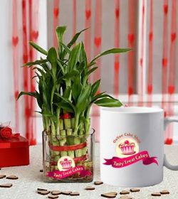 Corporate-Plants-Combo