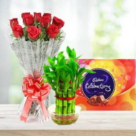 Lucky Bamboo Plant with Beautiful Red Roses Bunch and Chocolate